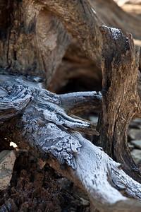 031 - Frozen wood