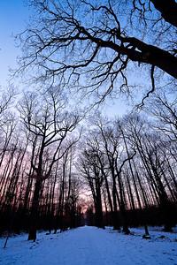 043 - Sunset Woods